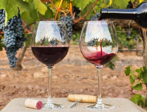Haal uw wijnhart op in de Bourgogne!